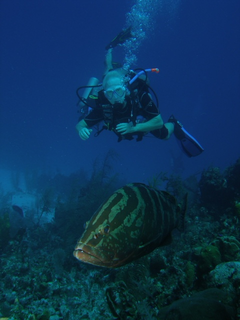 MOving in on Grouper